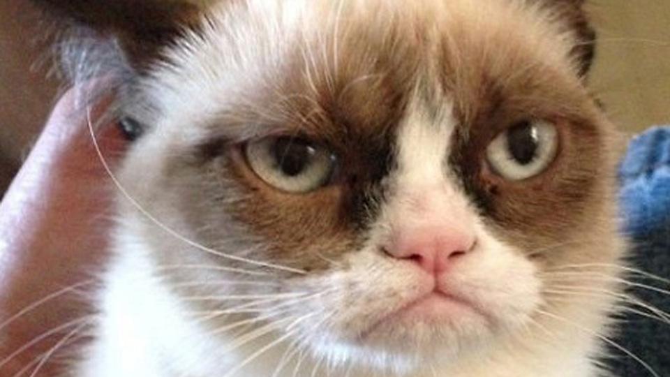 grumpy cat, cat videos, cat fest