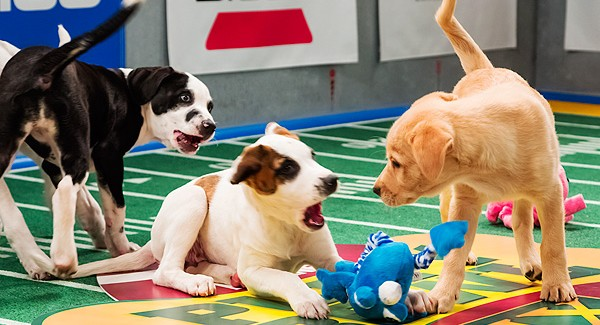 animal planet, puppy bowl